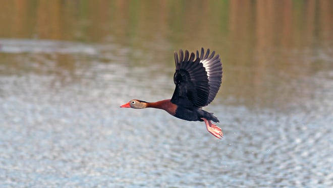 A Wildlife Photo Festival organized by the Brush Country Photo Safari group is scheduled for March 15-18 in and around Beeville.