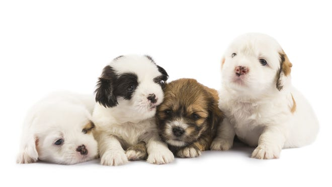 Nom, nom, nom! It's National Puppy Day on Friday, March 23 and that means a day to look at some cute puppy pics and take advantage of some deals for dog owners.