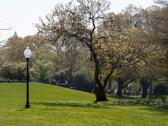 This April 28 photo shows an empty area where a tree
