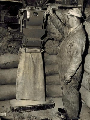 This circa early 1950s photo shows Fred Harris dispensing dairy feed into a bag.
