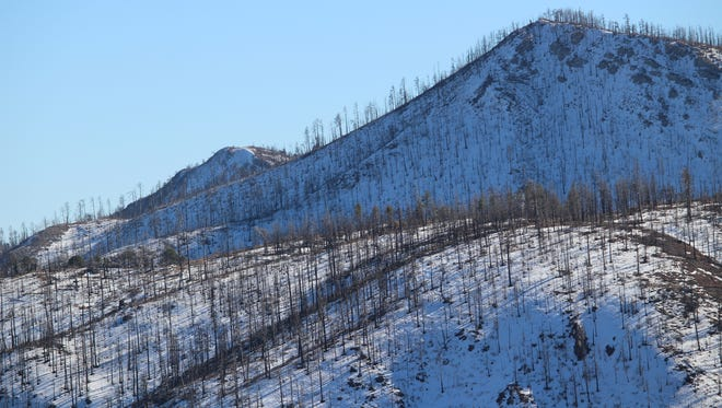 Burned trees in the Gila