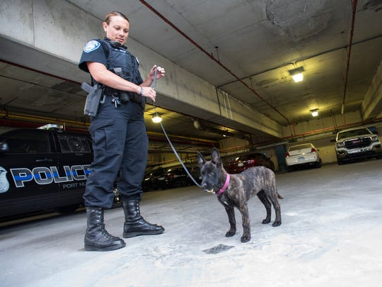 Port Huron Police K9 officer Jennifer Sly works with Jade Wednesday, June 6, 2018, at the Port Huron Police Department. Jade is a 9-week-old Dutch Shepherd that will be trained to detect 23 different chemicals used in explosive devices.