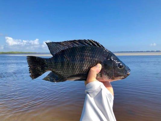 636627624520862221-fish-vid-b-5-25.jpg