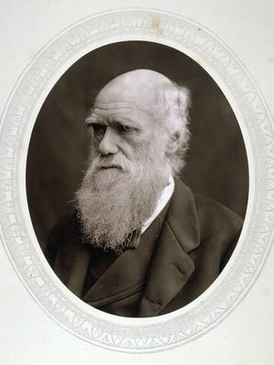 This photo provided by the Granger Collection shows English naturalist Charles Darwin in a photo from 1878.