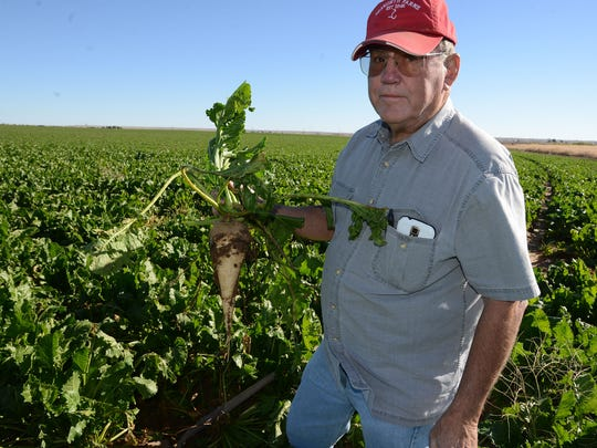Richard Seaworth holds up a sugar beet at the Seaworth Family Farm in Wellington Tuesday Oct. 7, 2014.