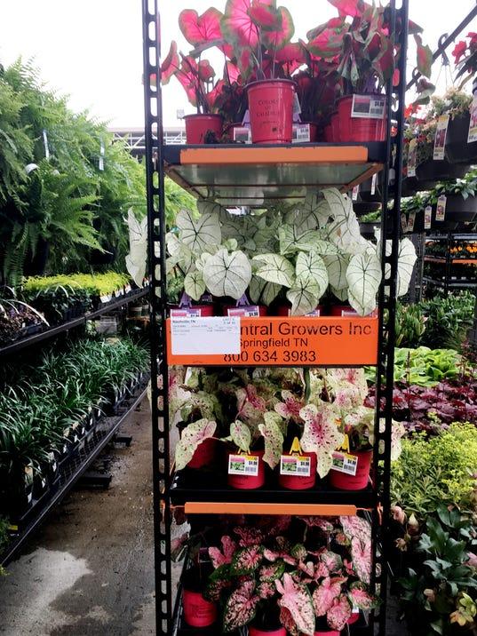 636604164828439888-Plants-04.JPG