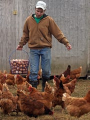 Tim Polnasek collects eggs in the late afternoon at his Polnasek Poultry Farm in Hillsborough.