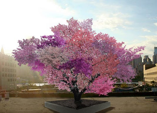 Tree with 40 fruit varieties? Grow your own