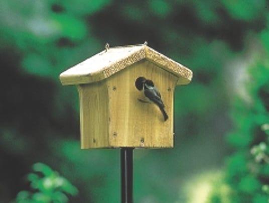 636238857465197515-chickadee-checking-out-nest-box.jpg