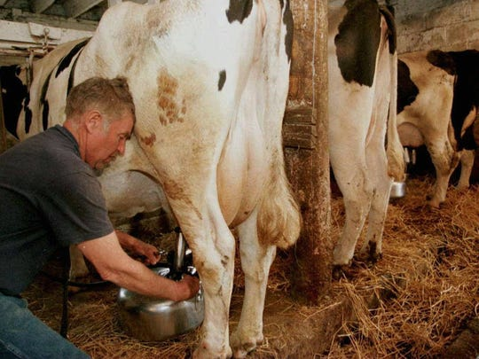 Dairy farmer Herb Keeley attaches a surge milking machine to one of his milking cows April 29, 1998 at his Turner Township, MI., dairy farm. Today many farms have opted to use robotic milkers to milk their dairy cows.