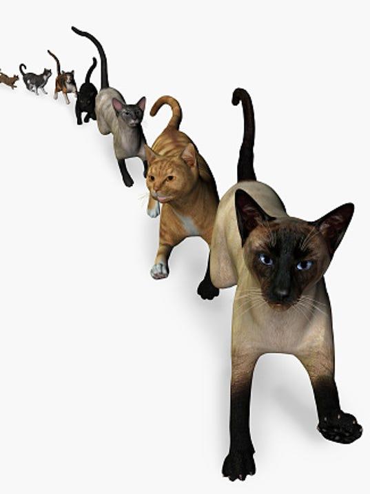 635889211855833203-row-of-cats.jpg