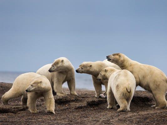 EPA (FILE) USA ARCTIC REFUGE ENV NATURE USA AK