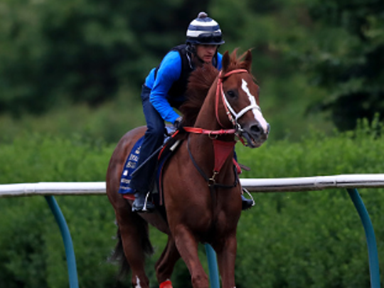 Bucchero is exercised on the gallops during the Royal