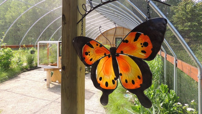 The enclosed butterfly house at the Butterfly Gardens of Wisconsin is just heating up. Visit often this summer to witness the parade of color, and butterflies, that will bloom and hatch in waves over the coming weeks.
