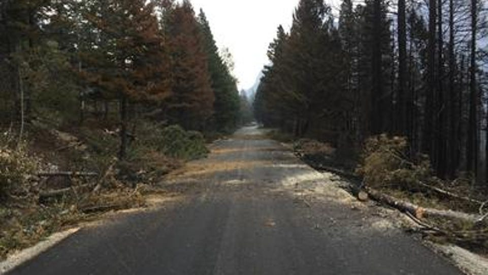 Firefighters are cutting down dead trees burned by