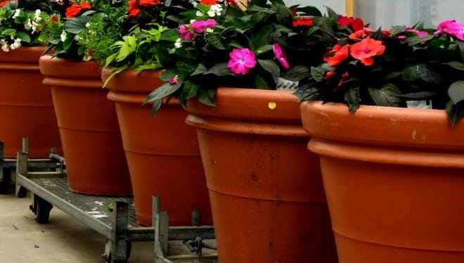 Container gardening is an easy and versatile way to enjoy an instant garden.