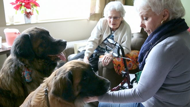 Ruth Watkins, 94, is visited by Elizabeth Hoffmeier and her two Leonbergers Augie, left, and Ripley at Seneca View nursing facility in Montour Falls on Jan. 29.