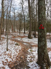 This is the start of the red trail at Shaupeneak Ridge.