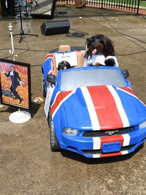 One groovy canine was made up as Austin Powers during the 2018 Dogs Days of Summer festival. This year's festival, organized by the Madonio Family Animal Welfare Trust, was canceled due to the COVID-19 pandemic.