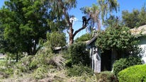 Our yards are a mess from the recent storm. Here are some cleanup tips