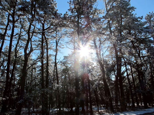 FILE - In this Dec. 11, 2013, file photo, the sun shines through snow-covered pine trees in the New Jersey Pinelands in Manchester, N.J. A hotly contested plan to run a natural gas pipeline through New Jersey's federally protected Pinelands preserve is getting a do-over.