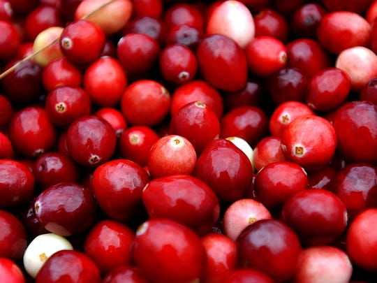 Cranberries are harvested at Weston Cranberry Farm in Carver, Massachusetts.