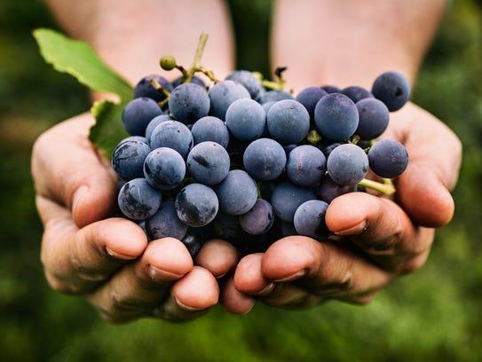Grapes contain resveratrol.