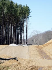 A group of pine trees were spared while creating new path for Possum Run Road.