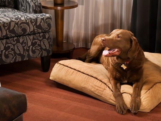 Pet Friendly Hotels In Wisconsin Dells