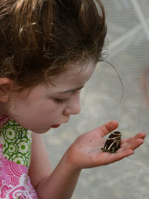Lila Fogarty, 5, is concerned, rightly, that the butterfly she found doesn't have long to live.
