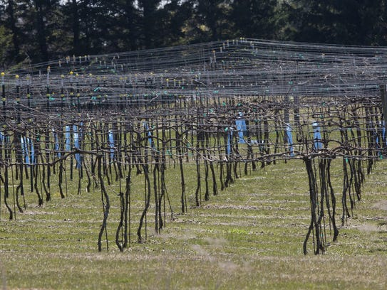 Grape vines are shown at SoLu Estate Tuesday April