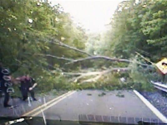 officer-douglas-faber-tree-falling.jpg