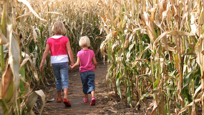 Two children taking a walk together.  (Entering a corn maze).