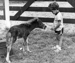 PHOTOS: Chincoteague Pony Swim throughout the years