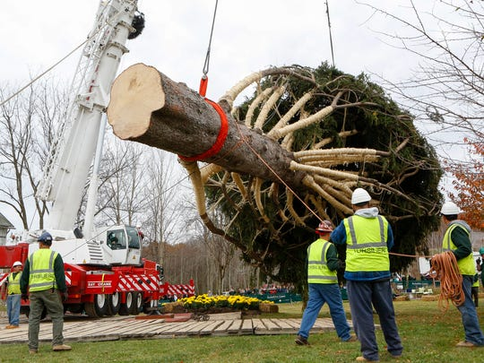 Rockefeller Christmas Tree Cut From Pa. Farm