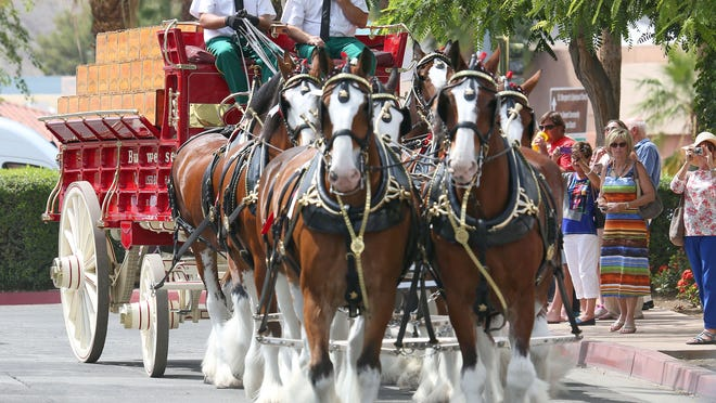 The Budweiser Clydesdales head toward El Paseo for an appearance in Palm Desert Wednesday. They were in town for an appearance at this weekend's Stagecoach festival.