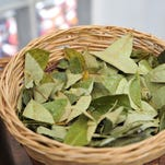 Is coca leaf the next South American superfood?