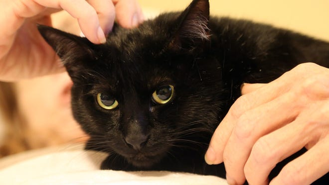 65-year-old Joan Price, who is dying from liver damage, gets a visit from her 2 and 1/2 year-old cat, Isis, at her Assisted Living Facility in Hollywood, Fla. Isis is being fostered by Leslie Wynne, who brings Isis once or twice a week to the home.