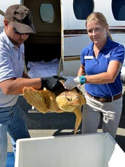 Handlers unload the sea turtle Jersey after its flight from New Jersey to South Carolina.