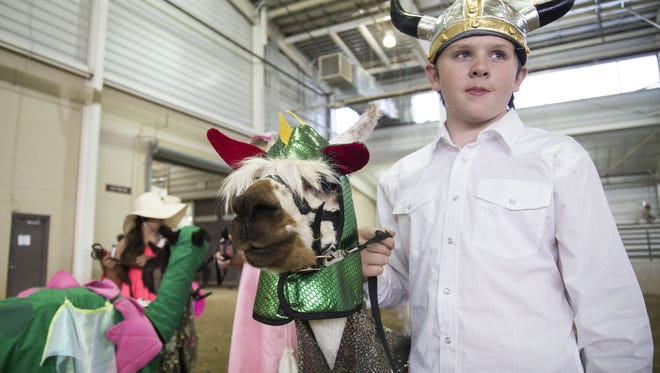 Colby Lee and his alpaca Tirgera wait for the costume portion of the competition to begin during the Larimer County Fair Monday, August 8, 2016.