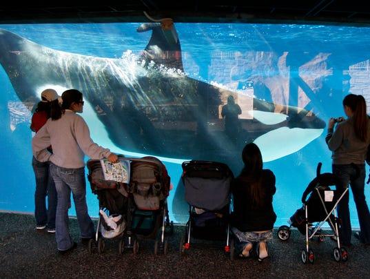 AP SEAWORLD-ORCA TANKS A FILE USA CA