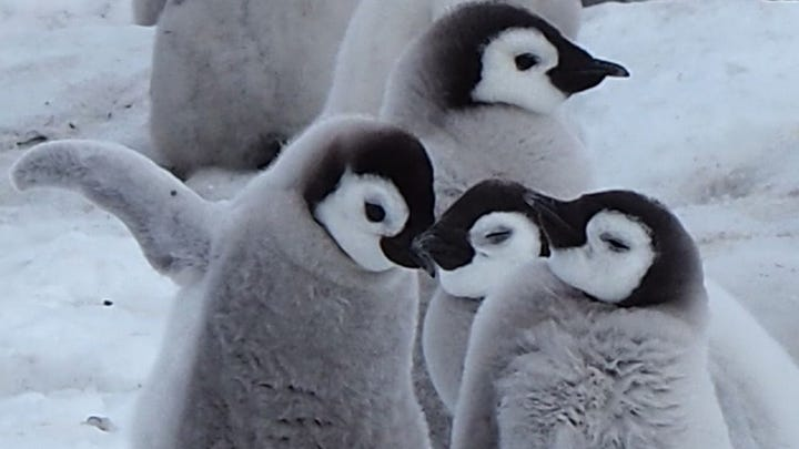 If you want to propose, don't let gender stop you. This woman proposed with the help of some penguins. Keri Lumm reports.