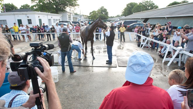 American Pharoah's 1st day at Monmouth Park after arriving from California. Fans and media watch Pharoah get a bath.