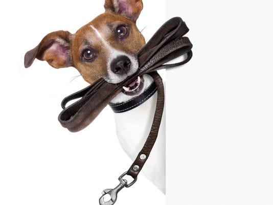 DogWalk.jpg