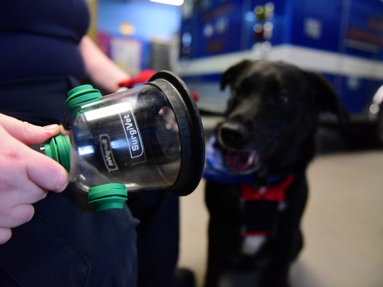 Captain Jessica Brunner of the New Milford Volunteer Ambulance Corps shows how the mask works on Cooper, her 3-year-old Labrador-shepherd mix, in New Milford on Friday, April 13, 2018.