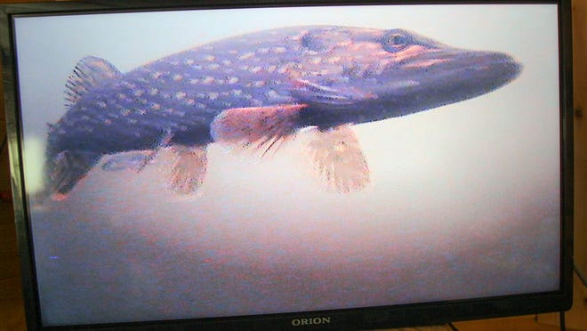This northern pike may look huge on a monitor, but in reality it's only about 28 inches long.