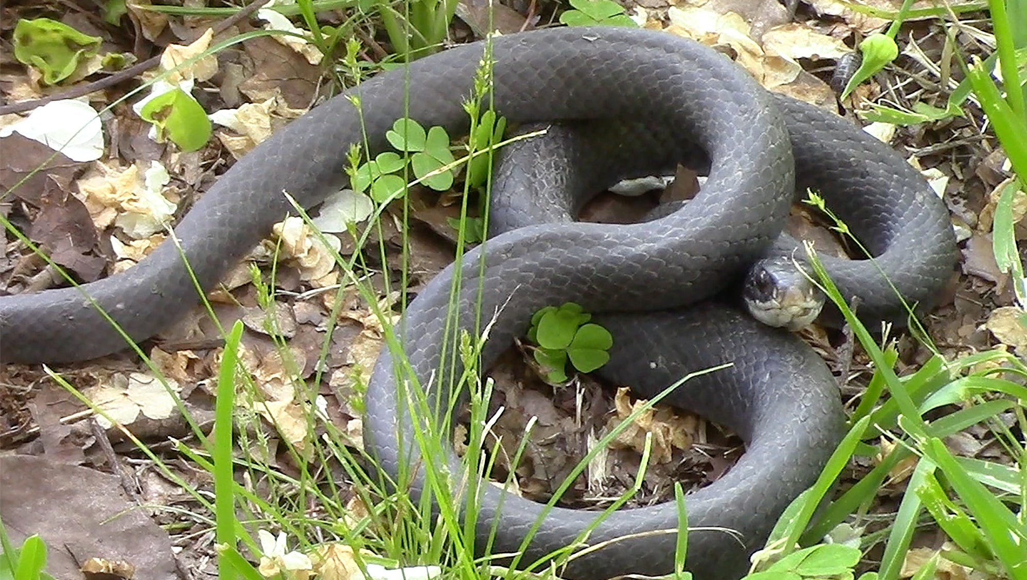 5 Snakes You May Encounter This Summer