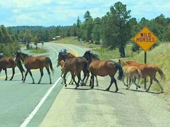 This photograph shows a portion of the Alto wild horse herd crossing at the sign put up by the New Mexico Department of Transportation. The sign and several others on  New Mexico State Highway 48 and Ski Run Road have become a source of local pride and a draw for tourists.