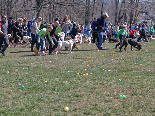 """Dogs and their people break from the gate at the start of the Faithful Friends' """"Dog-Gone Easter Egg Hunt,"""" which was preceded by an open-air Easter service hosted by SkyPointe Church in Wilmington's Rockford Park Saturday."""