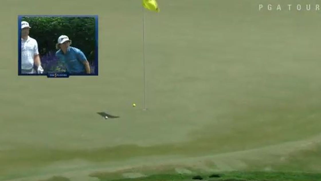 Will Wilcox aces 17th at TPC Sawgrass, goes crazy